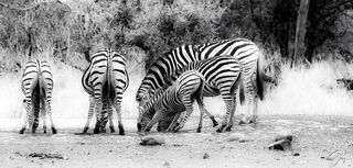 Stripes of All Sizes
